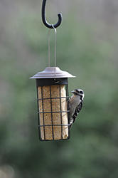 Wild Birds Unlimited Suet Cylinder Feeder