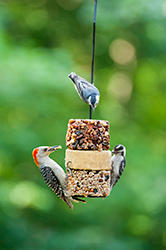 Wild Birds Unlimited Flying Start Combo